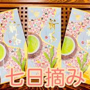 【2021年度産新茶】七日摘み 3袋 新茶限定パッケージ♪ 静岡 牧之原 100g×3袋 みずたま農園製茶場