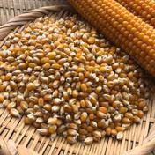 【国産❗️】ポップコーン原料豆1kg 1kg 果物や野菜などのお取り寄せ宅配食材通販産地直送アウル