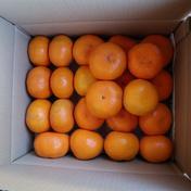 長崎県産 厳選秀品温州みかん5kg(贈答用可) 5kg 果物(みかん) 通販