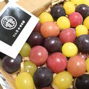 【予約販売】二箱 忍まるギフトBOX (一箱 約600g)  葡萄 ぶどう 粒ぶどう お中元 ご褒美 贈答用 贈り物 ギフト にん忍葡萄園 二箱 約1200g (一箱 約600g ) 3種類以上 果物(ぶどう) 通販
