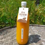 【無添加】しまなみ育ちの伊予柑ジュース 1L×4本 飲料(ジュース) 通販