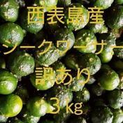 【送料無料】沖縄県西表島産 シークヮーサー 訳あり3㎏ 約3㎏ 果物(その他果物) 通販