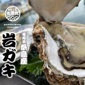 【糸島ブランド】トロ~り甘い!糸島岐志産生食用岩ガキ・中大サイズ3kgセット(9個前後) 3kg 魚介類(牡蠣) 通販