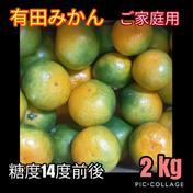 有田みかん🍊由良早生 2 kg    (ご家庭用)2S〜Lサイズ混合 北海道・沖縄への配送ができません。ご了承ください。 2 kg(箱込) キーワード: お試し 通販