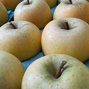 在庫はほんの少しだけ☆シナノゴールド訳あり 約3㎏ 約3㎏ 果物や野菜などのお取り寄せ宅配食材通販産地直送アウル