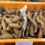 【訳あり】さつまいも シルクスイート8㎏ 8㎏ 野菜(さつまいも) 通販