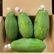 青パパイヤ 2kg以内 野菜(その他野菜) 通販