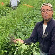 鈴木様専用 B品 2キロ 3ケース 3ケース入り 1箱 野菜(豆類) 通販