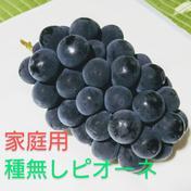 【家庭用】種無しピオーネ 3-5房 約1.8キロ 果物(ぶどう) 通販