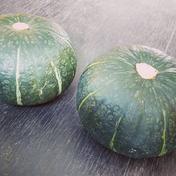★数量限定★化学農薬不使用カボチャ:栗カボチャおまかせ2個セット 栗カボチャ2個、合計約3.2~4.5kg相当 野菜(かぼちゃ) 通販