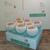 旬の和梨3kg 約3kg【6~9玉】 果物(梨) 通販