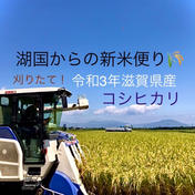 湖国からの新米便り 令和3年滋賀県産コシヒカリ玄米約10kg(箱込み)リサイクル箱 玄米箱込み10kgリサイクル箱 米(玄米) 通販