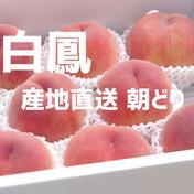 桃 【白鳳、御坂白鳳、雨宮白鳳etc...】 2㎏※重さを確約するものではありません。 果物(もも) 通販
