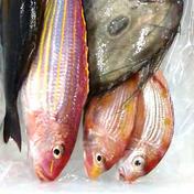 お買い得鮮魚セット送料無料 5から8匹 魚介類(セット・詰め合わせ) 通販