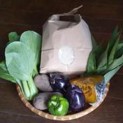 清流育ちの新米[コシヒカリ]とおまかせ野菜セット コシヒカリ3kgとおまかせ野菜2~3種類 群馬県 通販
