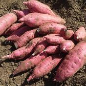 【紅はるか】阿部農園のさつまいも 約10kg 果物や野菜などのお取り寄せ宅配食材通販産地直送アウル