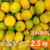 【小玉サイズ】「極早生みかん」2.5kg《送料無料》採れたて新鮮!!2Sサイズ以下 2.5kg(箱込み) 愛媛県 通販