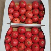 ひろちゃん野菜の訳ありトマト 約8キロ 野菜(トマト) 通販