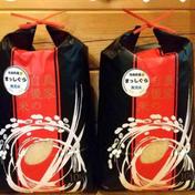 青森県産無洗米まっしぐら10kg×2 10kg×2 果物や野菜などのお取り寄せ宅配食材通販産地直送アウル