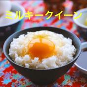 【新米】茨城県産ミルキークイーン 5kg【白米】 5kg キーワード: お試し 通販