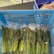 麦わら農園小松菜 200グラムが.5袋 滋賀県 通販