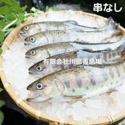 阿蘇から届く 湧水やまめ 10匹セット 600g~800g 魚介類(川魚) 通販