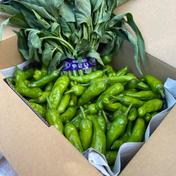 いけもと様専用 空芯菜 ししとう詰め合わせ 1.5kg 神奈川県 通販