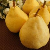 ル・レクチェ 青秀品 中玉 約4kg 約4kg(10〜14個入り) 果物や野菜などのお取り寄せ宅配食材通販産地直送アウル