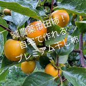 渋柿4キロ(市田柿用)※減農薬栽培 4kg 果物や野菜などのお取り寄せ宅配食材通販産地直送アウル