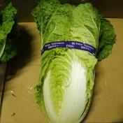 なべくら高原ひぐらし農場 なべくら高原産・新鮮白菜 10kg程度