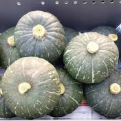 手の平サイズかぼちゃ 1.5kg 1.5kg 野菜(かぼちゃ) 通販