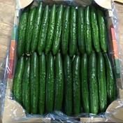 新鮮きゅうりA品 朝採り野菜 4kg 福島県 通販