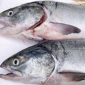 漁師の店 秋鮭とイクラの醤油漬けセット‼️ 秋鮭1.5kg~2kg、醤油漬け150g