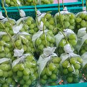 シャインマスカット&ピオーネ詰め合わせ 3から4房入り 2キロ程度 果物(ぶどう) 通販