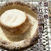 あと1時間限定母の日クール便発送込みの当日収穫肉厚1.2キロ 1.2キロ 徳島県 通販
