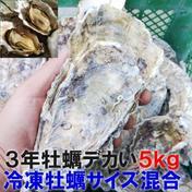 デカい牡蠣 殻付き 牡蠣 3年牡蠣 5kg 冷凍便 送料無料!5キロ 宮城県産 殻付き牡蠣 殻付き 殻付 カキ 加熱用 松島牡蠣屋 5kg 果物や野菜などのお取り寄せ宅配食材通販産地直送アウル