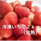 濃厚いちごで作った冷凍いちご2㎏ 2㎏(1㎏×2袋) 埼玉県 通販