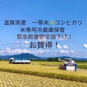 早い者勝ち✨緊急数量限定特価!令和2年滋賀県産減農薬コシヒカリ約10kg玄米リサイクル箱 コシヒカリ玄米箱込み10kg 滋賀県 通販