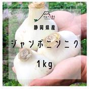 【静岡県産】ジャンボニンニク 1kg 野菜(にんにく) 通販