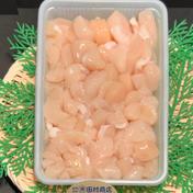 冷凍ホタテ貝柱刺身用(不揃い)500g 500g1パック 魚介類(ホタテ) 通販