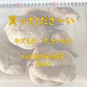 わけあり、安納芋ゴロゴロ5キロ  約5キロ 福岡県 通販