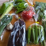 今が旬!夏のオススメ野菜セット(7~8品目)  60サイズ段ボールに7~8品目以上 秋田県 通販