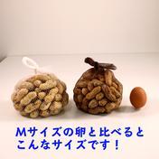 【最高峰の鮮度】あんばい農園の生落花生『おおまさり』1kg 1kg 野菜(豆類) 通販