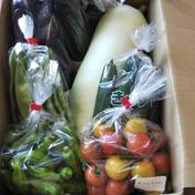 野菜詰合せ 80サイズに入るだけ 新潟県 通販