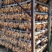玉ねぎ大国淡路島からの玉ねぎ4kg 玉ねぎ4kg 野菜(玉ねぎ) 通販