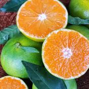 初秋の宝石 紀のゆらら 10キロ 秀品 希少品種 送料無料 10kg 果物 通販