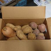 ⭐ジャガイモ小分け3種とバターナッツ(約5kg) 約5kg 北海道 通販