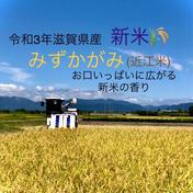 お待たせしました!滋賀県産新米みずかがみ みずかがみ白米箱込み10kgリサイクル箱 果物や野菜などのお取り寄せ宅配食材通販産地直送アウル