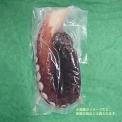 北海道小樽産 茹でタコ足 1本400g×1 タコ足1本400g×1 魚介類(タコ) 通販