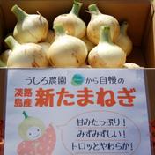 【早割予約10%off】地元でも美味しいと好評!淡路島の新たま 約3kg 果物や野菜などのお取り寄せ宅配食材通販産地直送アウル